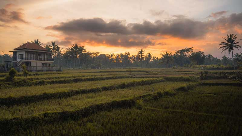 Sunrise over the rice paddies in Ubud - Bali