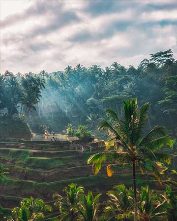 Tegallalang rice paddies, sunrise in Ubud, Bali