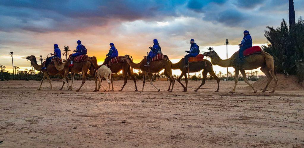 Sunset camel safari, Palm Grove, Morocco