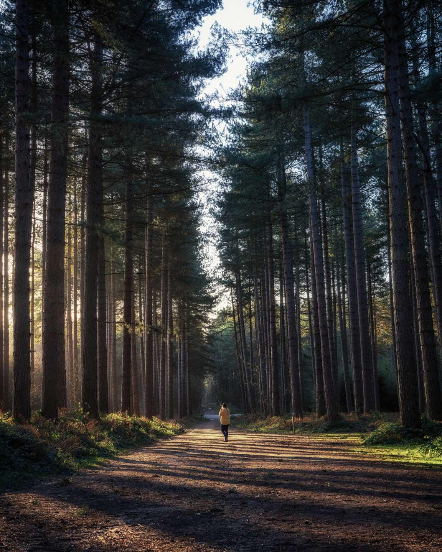 Sherwood Forest in Nottinghamshire at sunrise